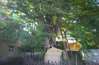 練馬のパワースポット、白山神社の大ケヤキ-練馬のおすすめニュース編集室