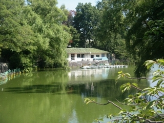 手軽にボートが楽しめる都会のオアシス・武蔵関公園-練馬のおすすめニュース編集室