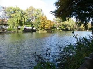 三宝寺池で名高い観光スポット・石神井公園-練馬のおすすめニュース編集室