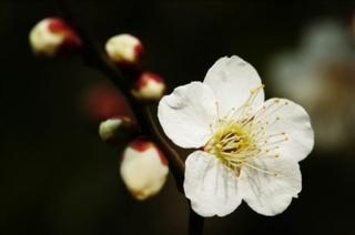花とみどりの相談所で植物とふれあおう-練馬のおすすめニュース編集室