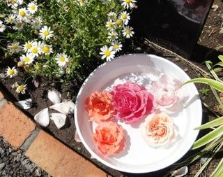 光が丘「四季の香ローズガーデン」でバラの香りを楽しもう!-練馬のおすすめニュース編集室