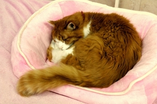 おすすめ!猫専用の動物病院&ペットホテル-練馬のおすすめニュース編集室